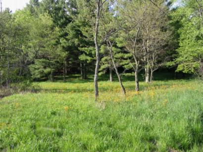 Lovely meadow  is prime homesite in this restricted development